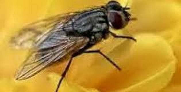 Δείτε Κόλπο για να Διώξετε τις Μύγες με Φυσικό Τρόπο!