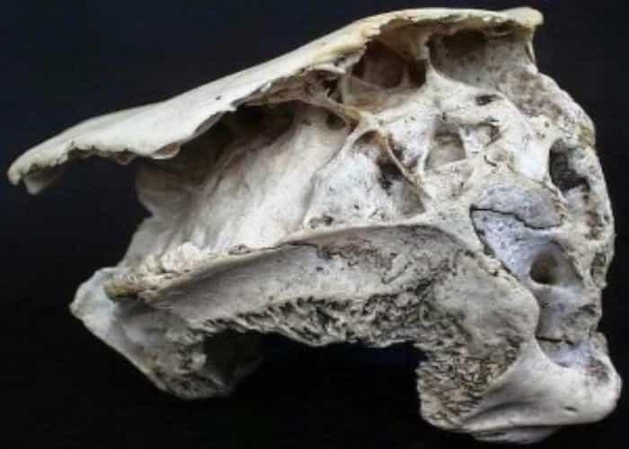 Το Μυστήριο του 30.000 ετών Εξωγήινου Κρανίου στην Ροδόπη (video)