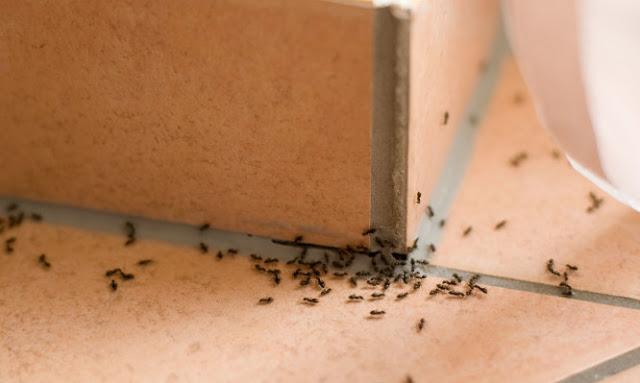 μυρμήγκια!