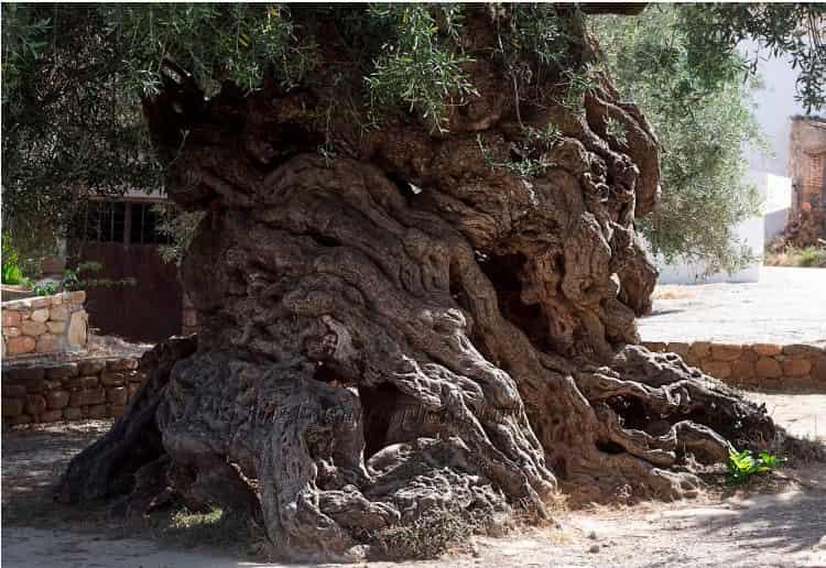 Το δέντρο στα Χανιά που τρέλανε τη NASA [Εικόνες]