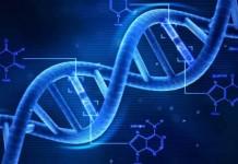 Τo DNA των Ελλήνων και των άλλων Βαλκανικών λαών