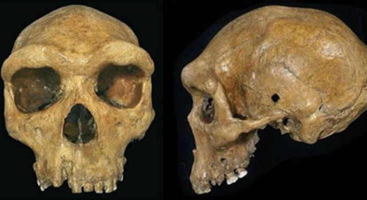 Κρανίο 300.000 ετών με μια τρύπα από σφαίρα; (video)