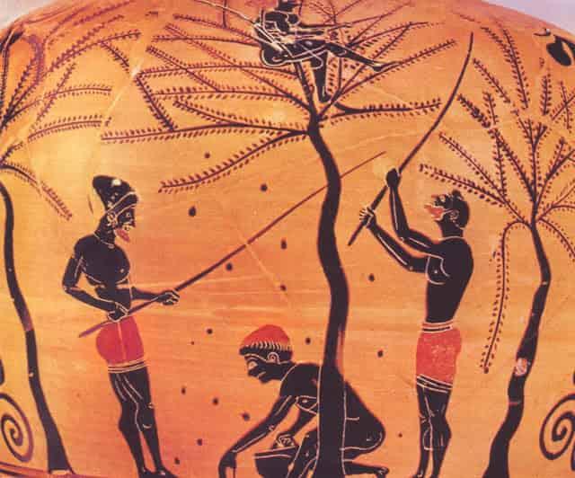 Πως Έφτιαχναν τις Φαγώσιμες Ελιές οι Έλληνες κατά την αρχαιότητα
