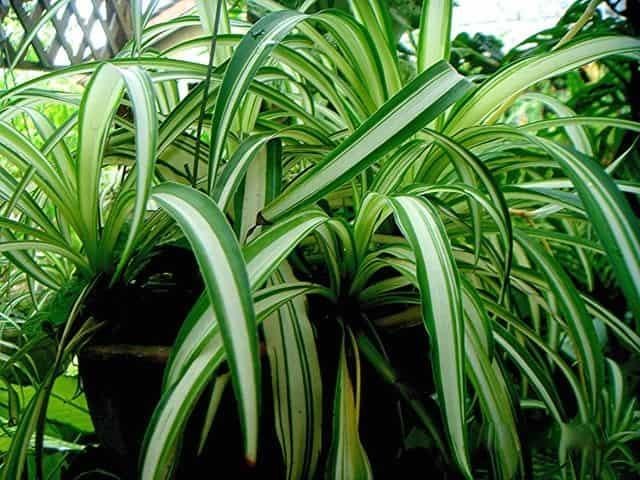 Αυτά τα Φυτά είναι «Βόμβες» Οξυγόνου