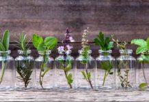 10 Θαυματουργά Βότανα που μπορούμε να Καλλιεργήσουμε στο Σπίτι μας ΧΩΡΙΣ χώμα αλλά μόνο με Νερό!