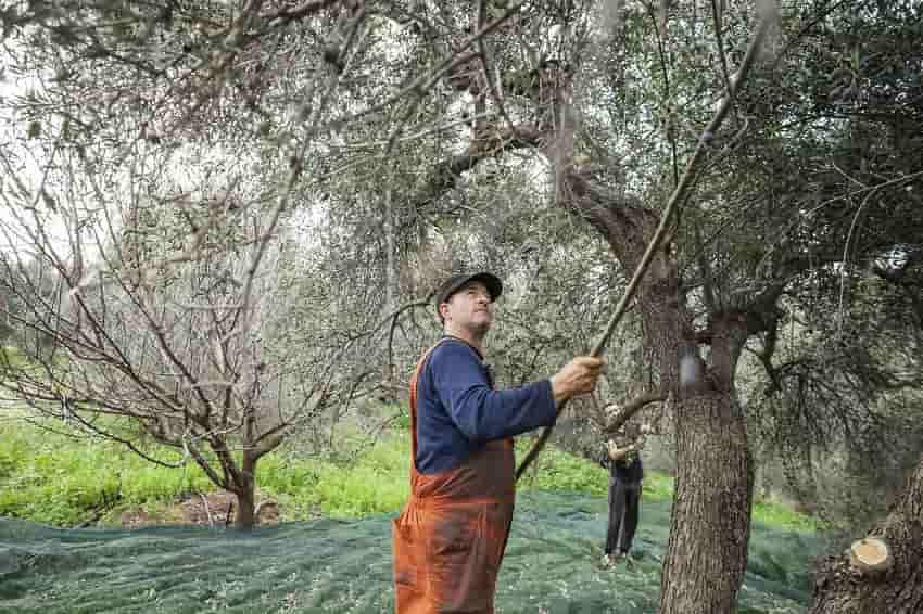 Κορρές: Τα 6.500 βότανα, μπορούν να γίνουν η νέα βαριά βιομηχανία της χώρας