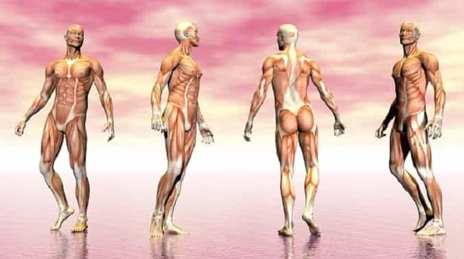 30 παράξενες αλήθειες: Το σώμα έχει υπεράνθρωπες δυνατότητες τις οποίες γνωρίζουν λίγοι