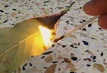 O λόγος που πρέπει να καίτε ένα φύλλο δάφνης στο σπίτι σας!