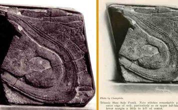 Βρέθηκε ΑΠΟΛΙΘΩΜΕΝΗ ΠΑΤΗΜΑΣΙΑ 200 εκ ετών, ΑΡΧΑΙΟΥ ΑΣΤΡΟΝΑΥΤΗ;
