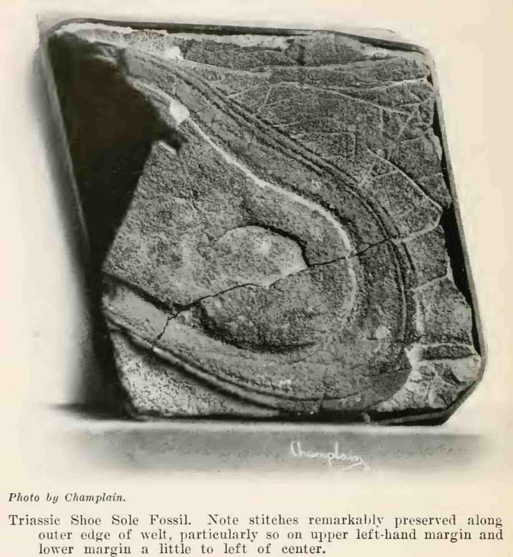 Βρέθηκε Απολιθωμένη Πατημασιά 200 εκ ετών; Μήπως η Ιστορία Πρέπει να Ξαναγραφτεί;