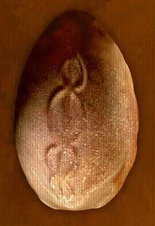 Το αυγό με την διπλή έλικα