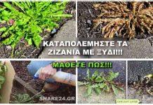 Αντιμετωπίστε τα Ζιζάνια με Ξύδι! Ένας Βιολογικός Τρόπος Που Δεν Γνωρίζουν Πολλοί!
