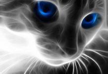 Το μάθημα της γάτας στον άνθρωπο