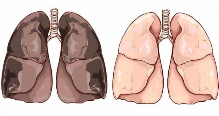 Πνεύμονες
