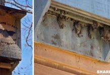 Φτιάξτε Ένα Σπιτάκι για τις Νυχτερίδες και Προσελκύστε τες στον Κήπο Σας. Μάθετε Γιατί