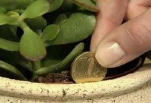 Βάλτε αυτό το φυτό σπίτι σας και θα δείτε τα χρήματα σας να αυξάνονται…