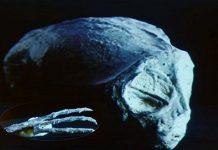 ΕΡΕΥΝΗΤΕΣ βρήκαν ΜΟΥΜΙΕΣ από ΕΡΠΕΤΟΕΙΔΗ στην NAZCA (video)