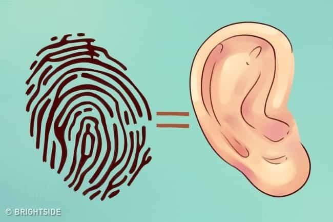Τι Αποκαλύπτουν τα Αυτιά σας Για τον Εαυτό σας