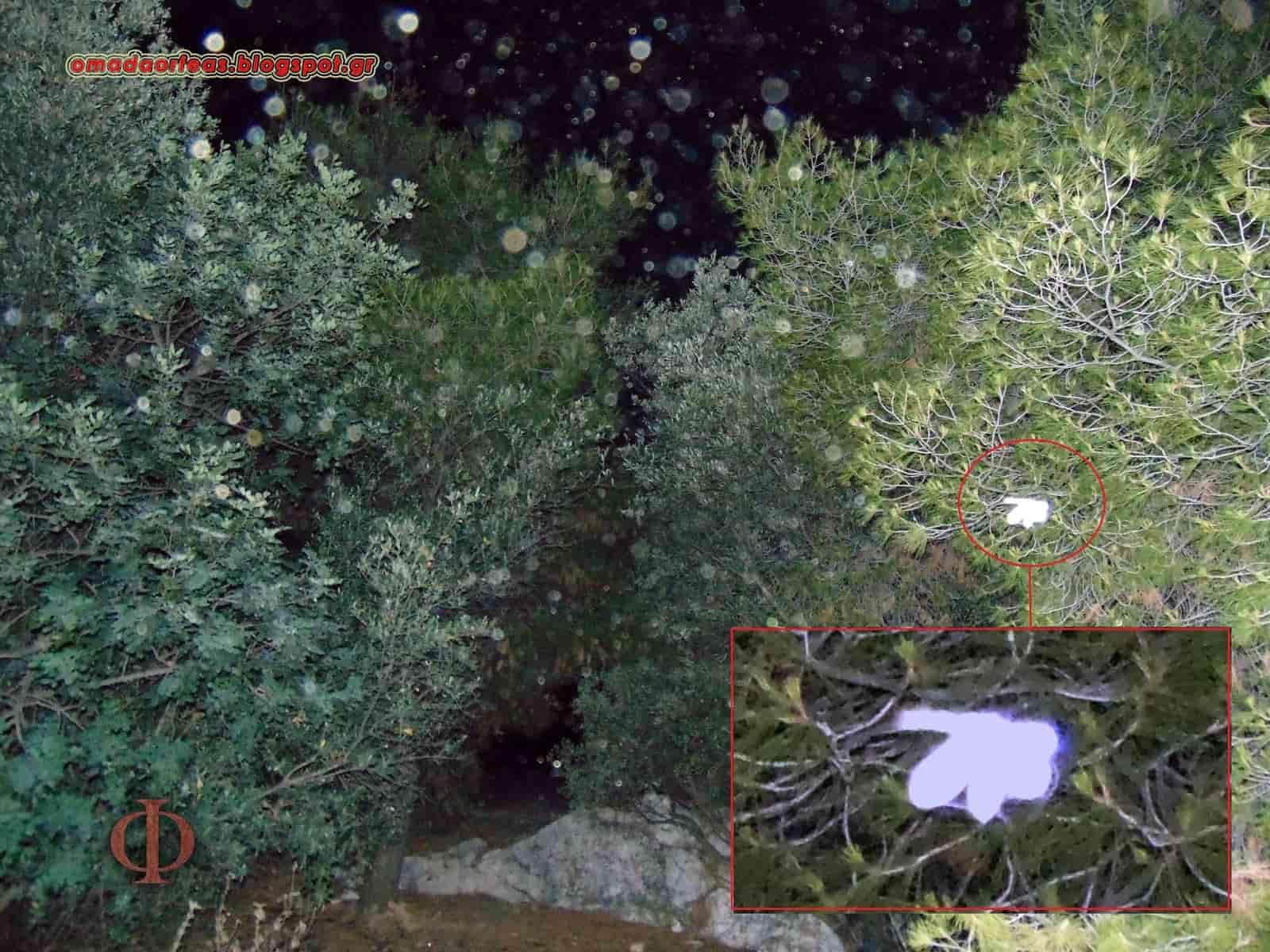 Δεν Φαντάζεστε «Τι» Κατοικούν στα Ελληνικά Σπήλαια!!! (εικόνες)