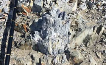 Ανακαλύφθηκε Απολιθωμένο Δάσος 280.000.000 ετών στην Ανταρκτική