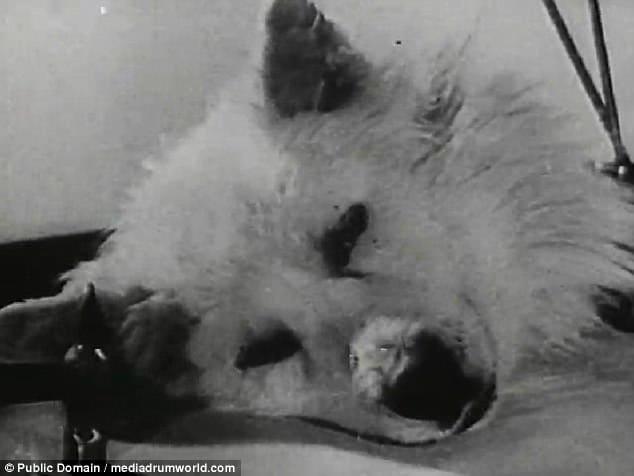 Σοβιετικοί Επιστήμονες Ανέστησαν το Κομμένο Κεφάλι ενός Σκύλου