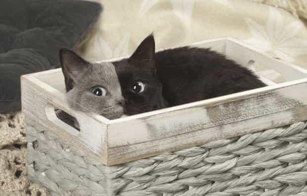 Αυτή η Γάτα έχει Κάτι Ξεχωριστό! Και δεν είναι μόνο αυτό που βλέπετε!