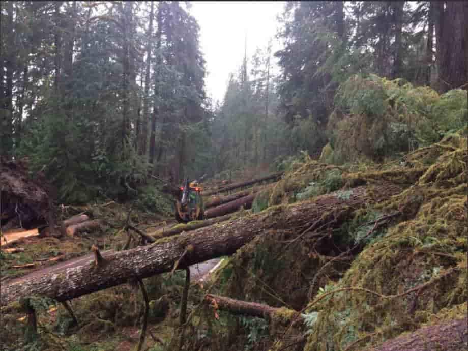 Ποια Υπερφυσική Δύναμη Έσπασε και Έριξε Γερά και Υγιή Δέντρα; (video)