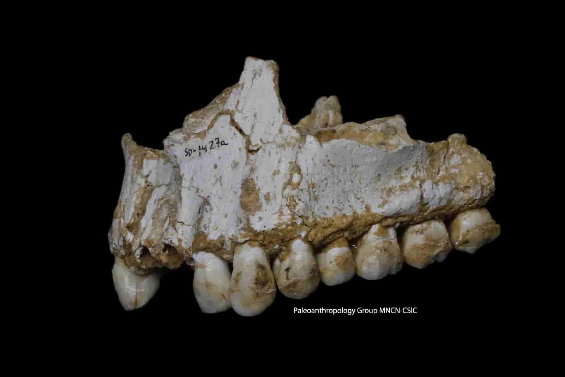 Ανέλυσαν DNA από Οδοντοστοιχία Νεάντερταλ ΟΜΩΣ Αυτό που Βρήκαν Ανάμεσα στα Δόντια Ξάφνιασε τους Επιστήμονες