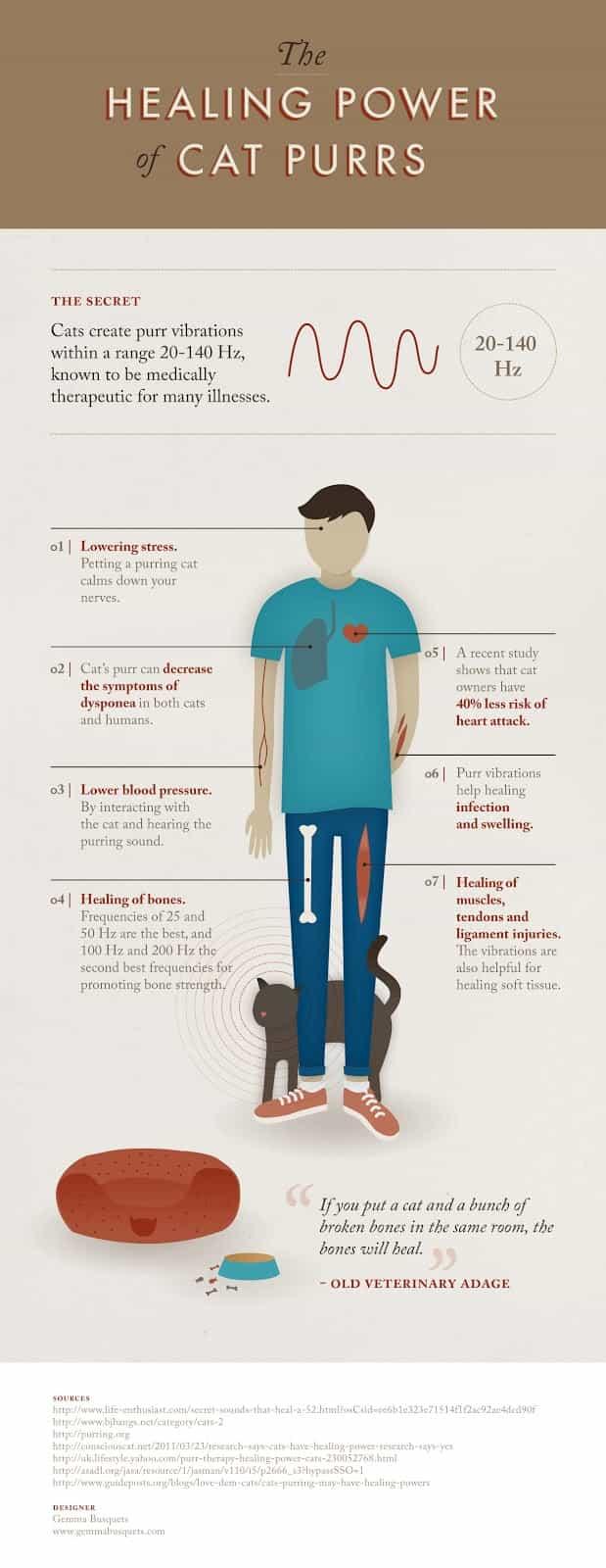 Γουργούρισμα της Γάτας: Οι Άγνωστες και Απίστευτες Θεραπευτικές Ιδιότητές του