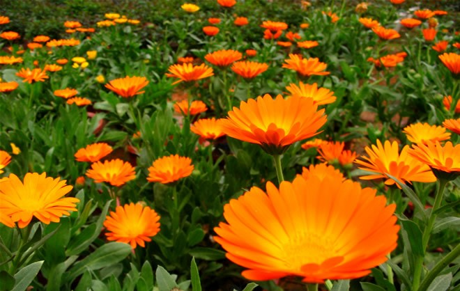 Τι Συμβολίζει το Λουλούδι που Αντιστοιχεί στον Μήνα Γενεθλίων σου