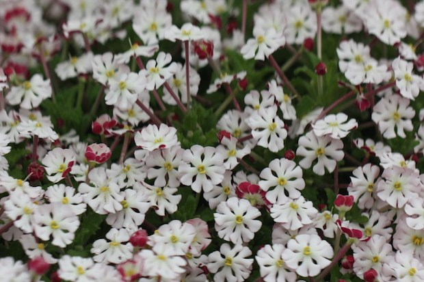 Φυτέψτε τον Δικό σας Μαγικό Κήπο με Λουλούδια που Ανθίζουν τη Νύχτα
