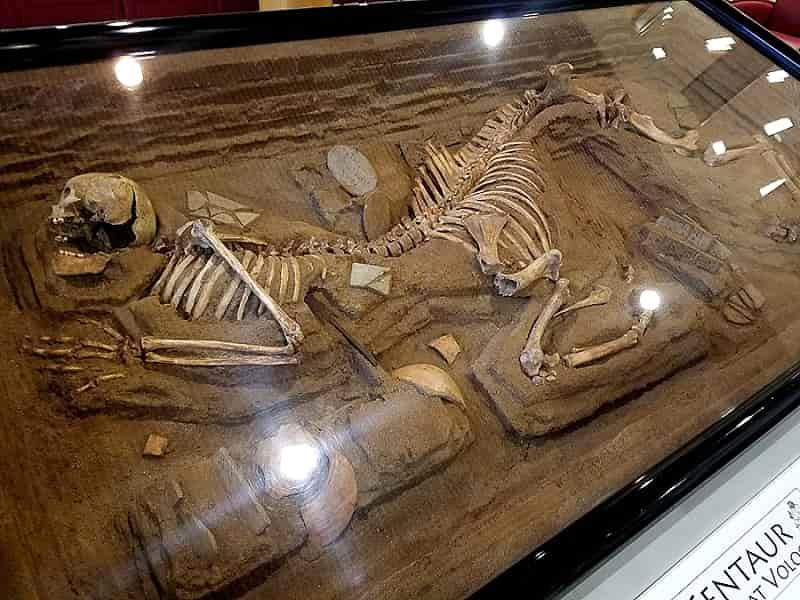 Ο Παράξενος Τάφος με Σκελετό Κενταύρου του Βόλου σε Πανεπιστήμιο