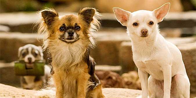 Ποιά Είναι η Ιδανική Ράτσα Σκύλου για το Ζώδιό σου