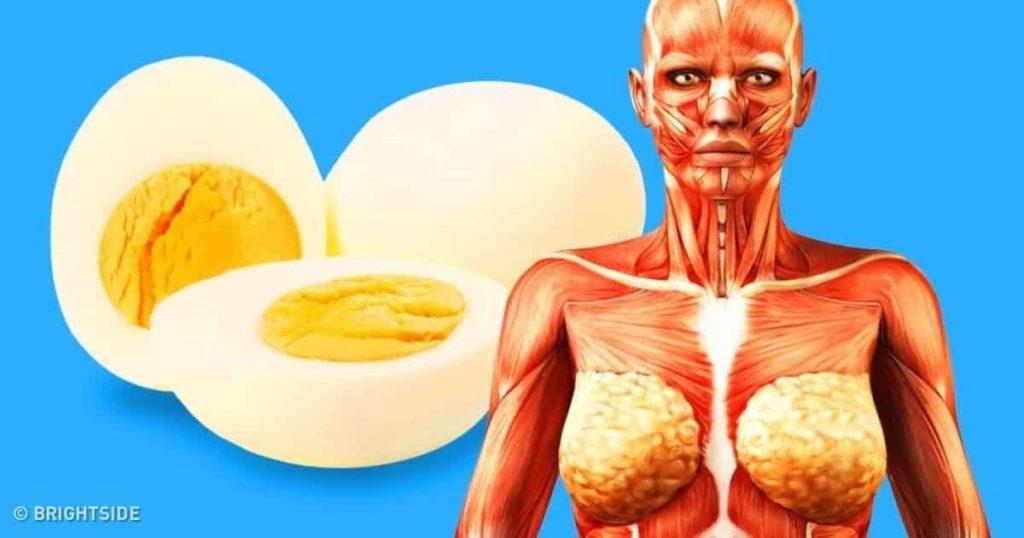 Τι θα Αρχίσει να Συμβαίνει στο Σώμα σας Αν Τρώτε 2 Αυγά Κάθε Μέρα