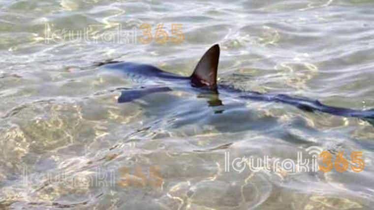 Καρχαρίας Κόβει Βόλτες στο Λουτράκι και Παγώνει το Αίμα (video)