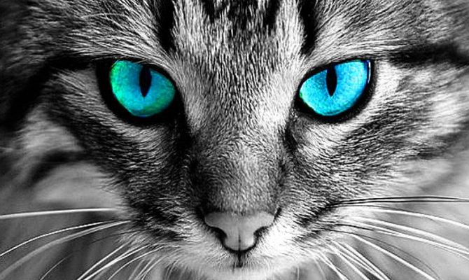 Γιατί Δεν Πρέπει να Κοιτάτε μια Γάτα Μέσα στα Μάτια