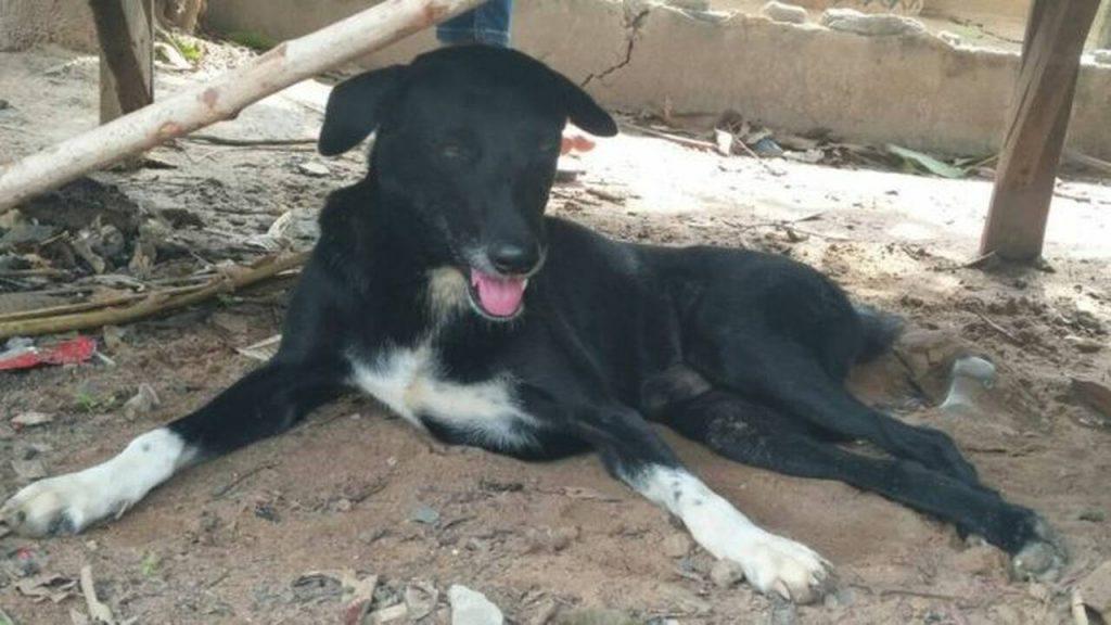 Σκύλος Ήρωας Έσωσε νεογέννητο που έθαψε ζωντανό ανήλικη μητέρα σε χωράφι