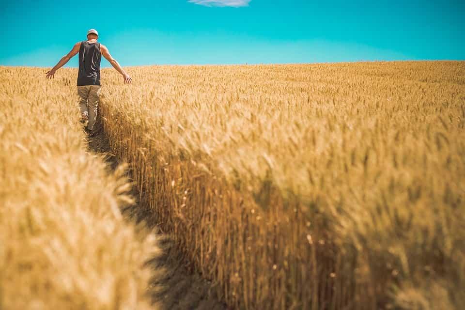 Το Πρώτο Αγρογλυφικό για το 2019 στην Βρετανία. Τι Σηματοδοτεί το Σχέδιό του για το Μέλλον;