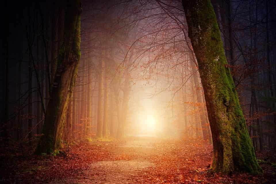 Το Αγόρι που Χάθηκε στο Δάσος Αλλά όταν Βρέθηκε Μιλούσε Άπταιστα Ξένες Γλώσσες