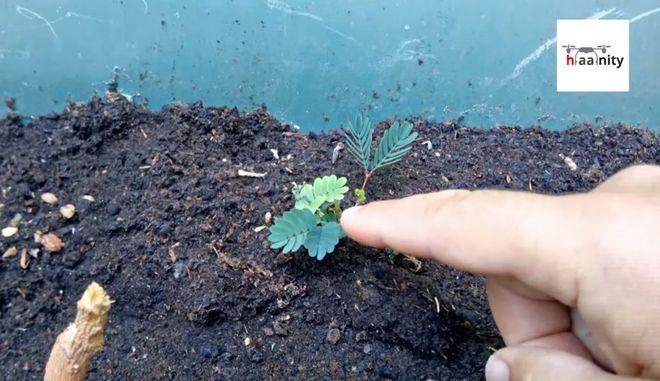 Το Παράξενο Φυτό που Δεν Θέλει να το Αγγίζουν ενώ Μαθαίνει και Θυμάται Χωρίς να Διαθέτει Εγκέφαλο!