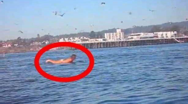 Στην Αρχή Όλα ήταν Χαλαρά. Όμως, μία Φάλαινα Πετάγεται που θα Μπορούσε να την κάνει μία Μπουκιά (video)