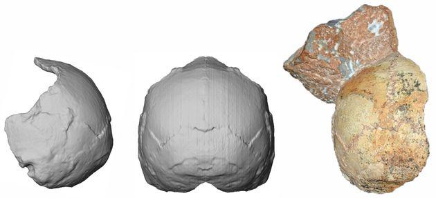Βρέθηκε Κρανίο 210.000 ετών στη Μάνη και είναι το Αρχαιότερο Δείγμα Σύγχρονου Ανθρώπου της Ευρασίας