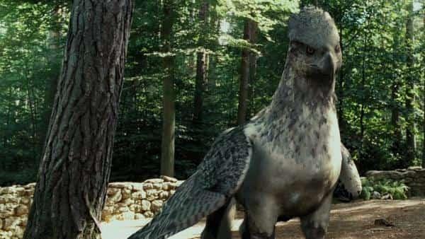 Καταγράφηκε Πτηνό που Μόνο με τον Ιππόγρυπα του Χάρρυ Πότερ θα Μπορούσε να Συγκριθεί