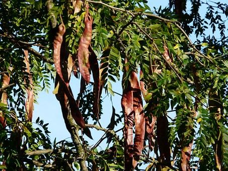 Το δέντρο που δεν καίγεται και έσωσε μια οικογένεια στην Αττική από τη μανία της πυρκαγιάς