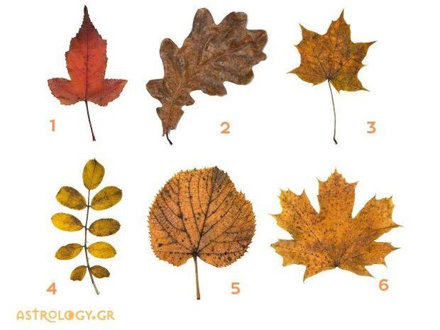 Τι είδους άνθρωποι είμαστε αποκαλύπτει η επιλογή του φθινοπωρινού φύλλου