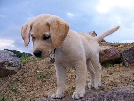 Παιχνιδιάρικο Σκυλάκι θέλει να παίξει με ένα καβούρι αλλά εκείνο έχει άλλη γνώμη (video)