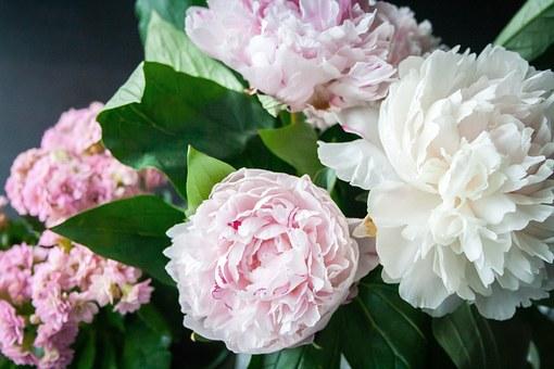 Τρία φυτά που επηρεάζουν θετικά την ψυχολογία μας στο σπίτι