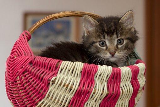 Κατοικίδια ζώα: Ο ρόλος τους στην υγεία μας. Τι έδειξαν έρευνες για αρτηριακή πίεση, χοληστερόλη, τριγλυκερίδια