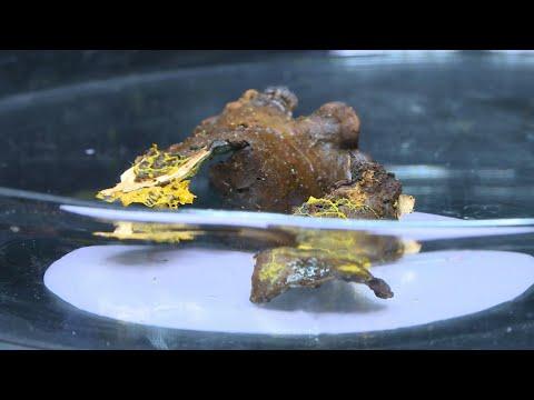 Θα μπορούσε να είναι εξωγήινη μορφή ζωής, μοιάζει με μύκητα, έχει νοημοσύνη, δεν είναι ζώο, το ονόμασαν «Blob» και εκτίθεται στο Παρίσι