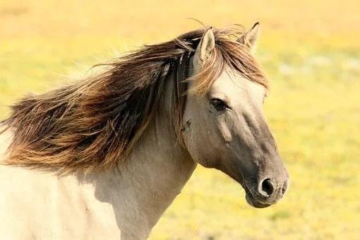 Ανέκδοτο: Μπαίνει ένας τύπος με ένα άλογο στο σαλούν